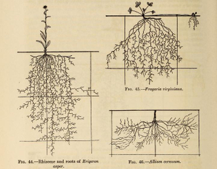 3-ecological_relationship_of_roots_08.jpg