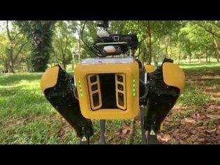 Robot dog SPOT patrolling the parks in Singapore | CBC Kids News