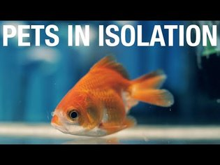 Pets in Isolation