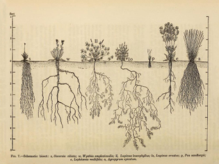 The Ecological Relations of Roots by John Ernest Weaver (1919)