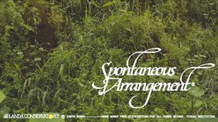 Landa Conservatory - Spontaneous Arrangement