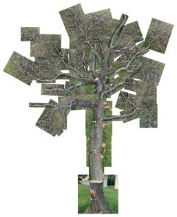 tree-galya.png