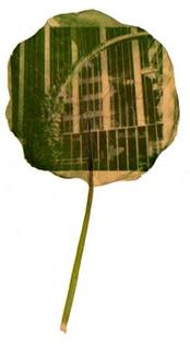 chlorophyll-ivy-on-pole-320x580.jpg