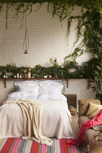 climbing plants for bedroom