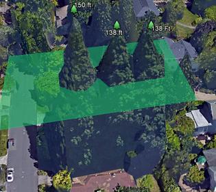 eastmoreland-sequoia.jpg