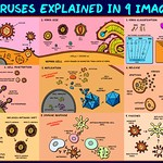 Viruses Explained In 9 Images