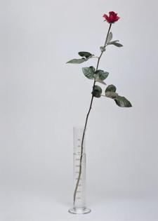 beuys-rose-3.jpg