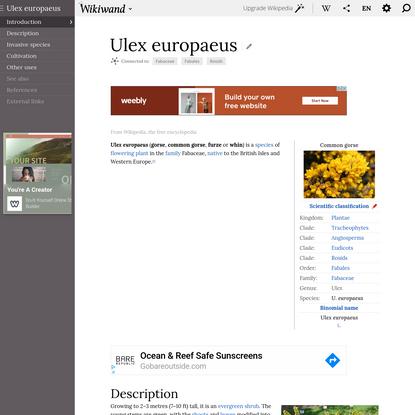 Ulex europaeus | Wikiwand