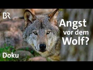 Die Story: Wer hat Angst vorm Wolf? | Kontrovers | BR | Doku