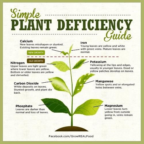 plant-nutrient-deficiency-symptoms.jpg