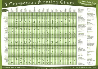 poster_gdn_com_plant.pdf
