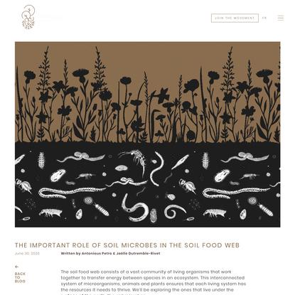 The Important Role of Soil Microbes in the Soil Food Web - Régénération Canada