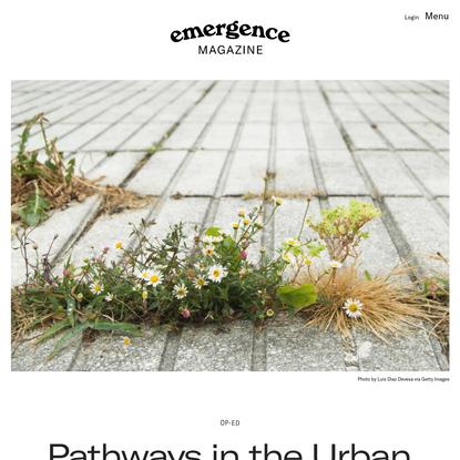 Pathways in the Urban Wild - Lucy Jones