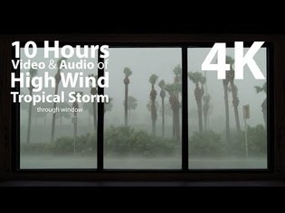 4K HDR 10 hours - High Wind Tropical Storm - relaxation, calming, ambient, mindfulness