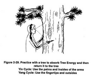 http://www.dharmacafe.com/gaia/how-to-befriend-a-tree/full/#.VYwXJVZ56f8.twitter