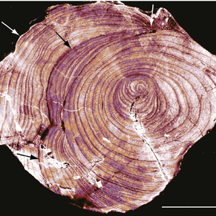 transversely-sectioned-prototaxites-fossil-this-overview-image-originating-from-a_q640.jpg