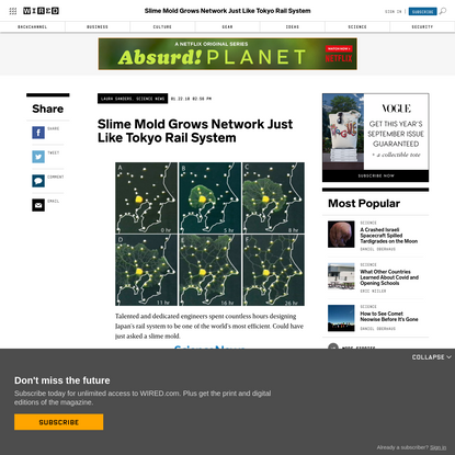 Slime Mold Grows Network Just Like Tokyo Rail System