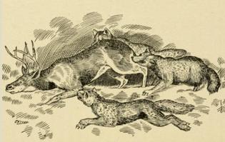Wolves_killing_caribou.png