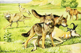 The_book_of_dogs_-1919-_Timber_wolf_and_coyote.png