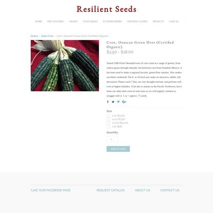 Corn, Oaxacan Green Dent (Certified Organic)