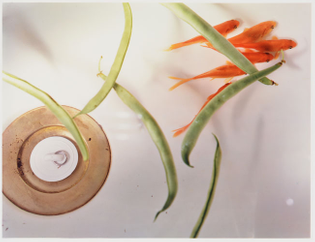 jac-goldfish-and-string-beans.jpg