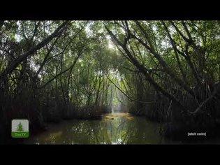 TreeTV | adult swim