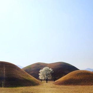a-tree-amidst-the-tombs.jpg