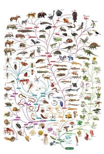 tree-of-life-darwin-at-the-top-694x1024.jpg