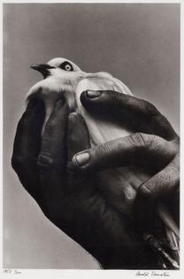 Harold Feinstein Bird in Hand, Brooklyn, N.Y.