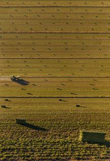 harvest_time-698x1024.jpg