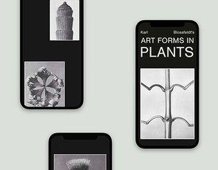 Karl Blossfeldt's Art Forms in Plants Editorial