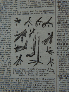 bird-feet.jpg