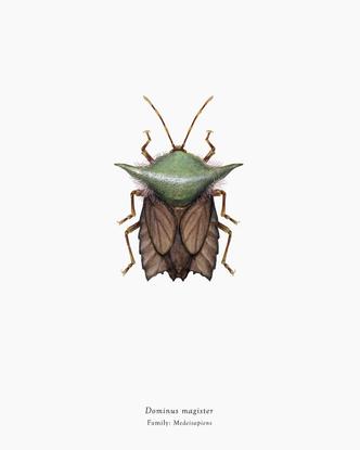 Arthropoda Iconicus
