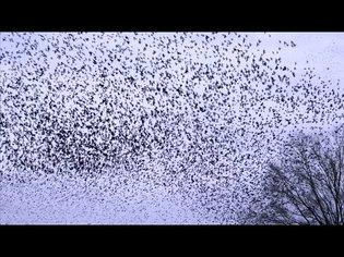 Boids Algorithm for Flocking Birds - Smarter Every Day 234