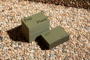 both_pop-plant_3.jpg
