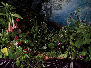 30tmag-poison-flowers-slide-srxs-superjumbo-v3.jpg?quality=90-auto=webp