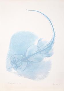 Agnes Denes, The Stingray, 1979