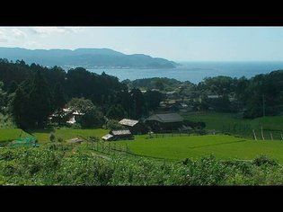 Life in a vibrant satoyama forest