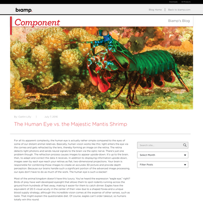 The Human Eye vs. the Majestic Mantis Shrimp - Component