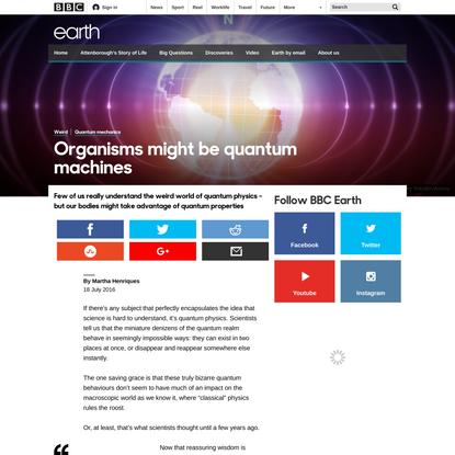 Organisms might be quantum machines