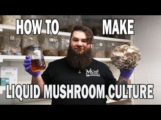 Liquid Mushroom Culture from Gourmet Oyster Mushrooms, New Episode in How to grow Mushrooms Series
