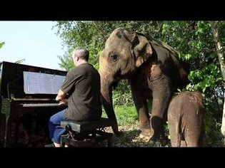 """Piano for Mother and Baby Elephant"" Vlog #3"