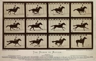 the-horse-in-motion.2.jpg?v=1408118367