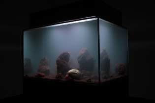 aquarium-architecture-frieze-art-fair-01-1410x940.jpg