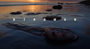 birdman-whysoblu-12.jpeg