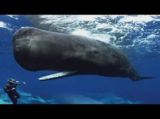 Sperm Whales Clicking You Inside Out - James Nestor at The Interval