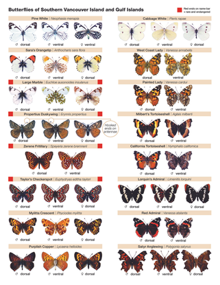 butterfly_id_sheet_parks_canada.pdf