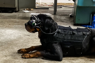 The US Army is testing augmented reality goggles for dogs