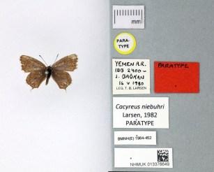 3-butterfly-types.jpg?w=307-h=247-ssl=1