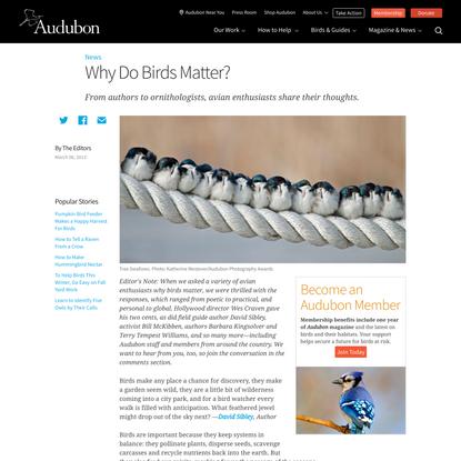 Why Do Birds Matter?
